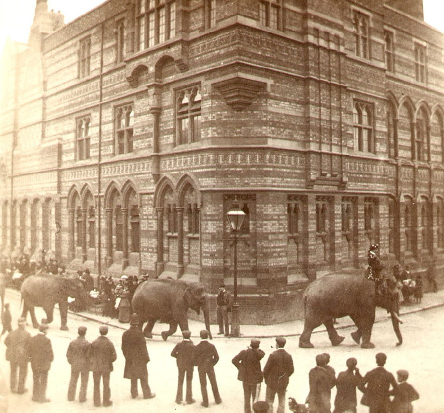 Elephants in Lawrence Sheriff Street during visit of Bostock and Wombwell's menagerie, Rugby.  1910 |  IMAGE LOCATION: (Rugby Library)