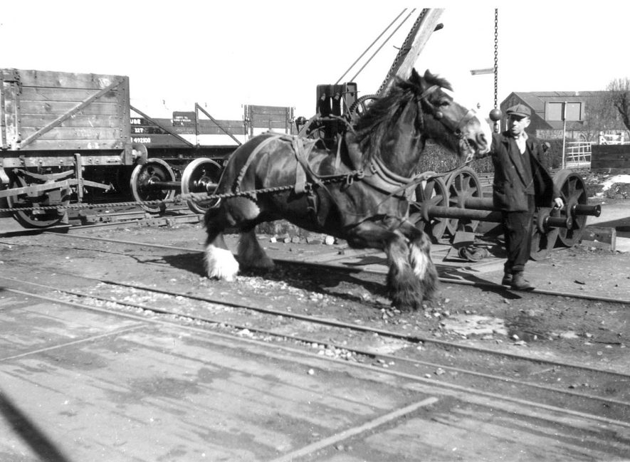 A horse pulling a wagon at Hunter's Wagon Works, Mill Road, Rugby.  1953 |  IMAGE LOCATION: (Rugby Library)