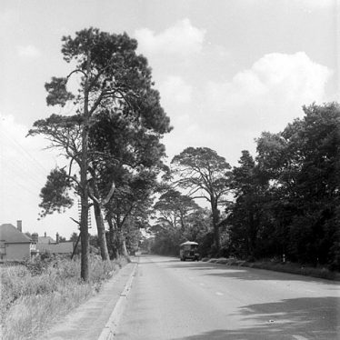 Dunchurch.  Tree lined road