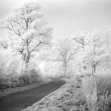 Birdingbury.  Trees with hoar frost