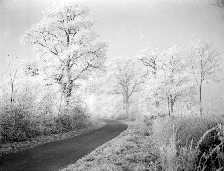 Hoar frost on hedges and trees in Birdingbury.  1930s |  IMAGE LOCATION: (Warwickshire County Record Office)