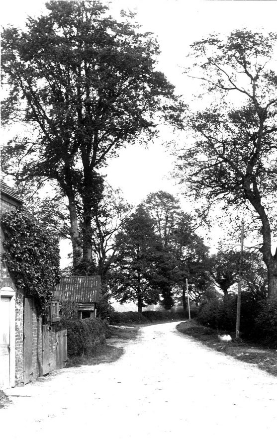 Tree-lined Birdingbury Road, Marton.  1900s |  IMAGE LOCATION: (Warwickshire County Record Office)