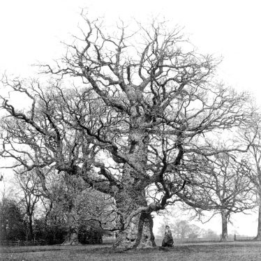 Stoneleigh.  Stoneleigh Abbey, old oak tree in the grounds