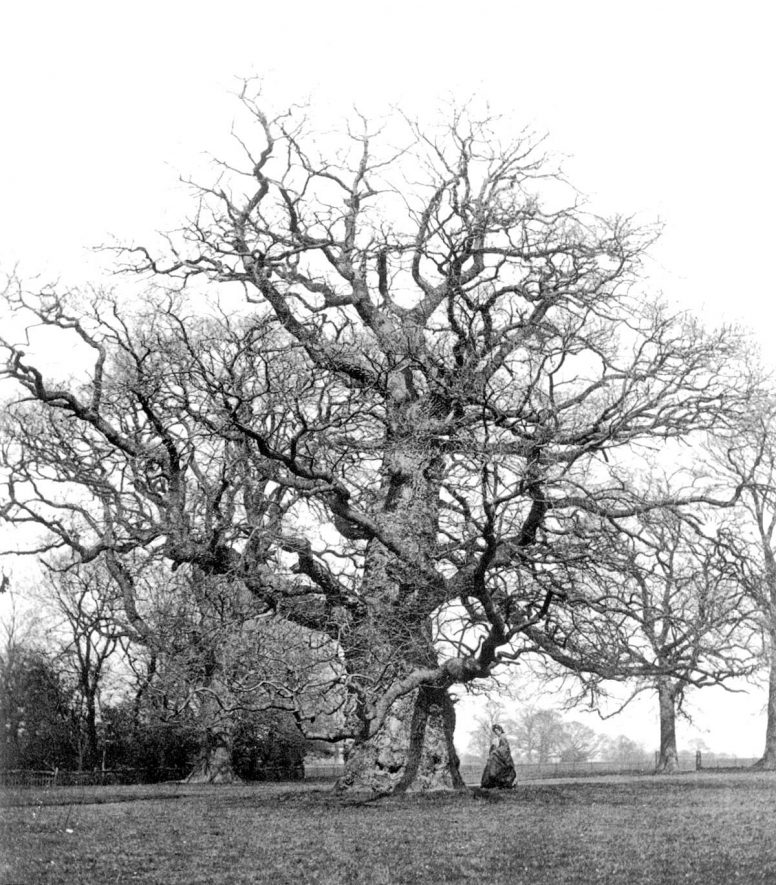 An old oak tree in Stoneleigh Park.  1860s |  IMAGE LOCATION: (Warwickshire County Record Office)