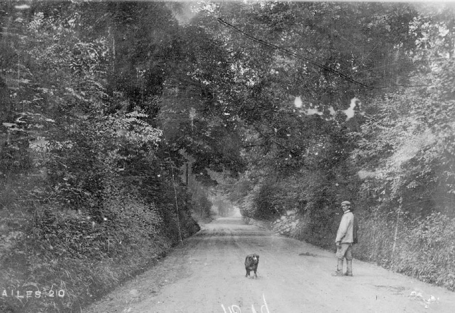 A leafy country lane with a man and his dog, Brailes.  1914 |  IMAGE LOCATION: (Warwickshire County Record Office)