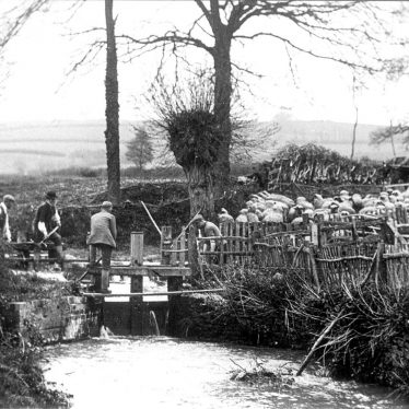 Sutton under Brailes.  Sheep washing