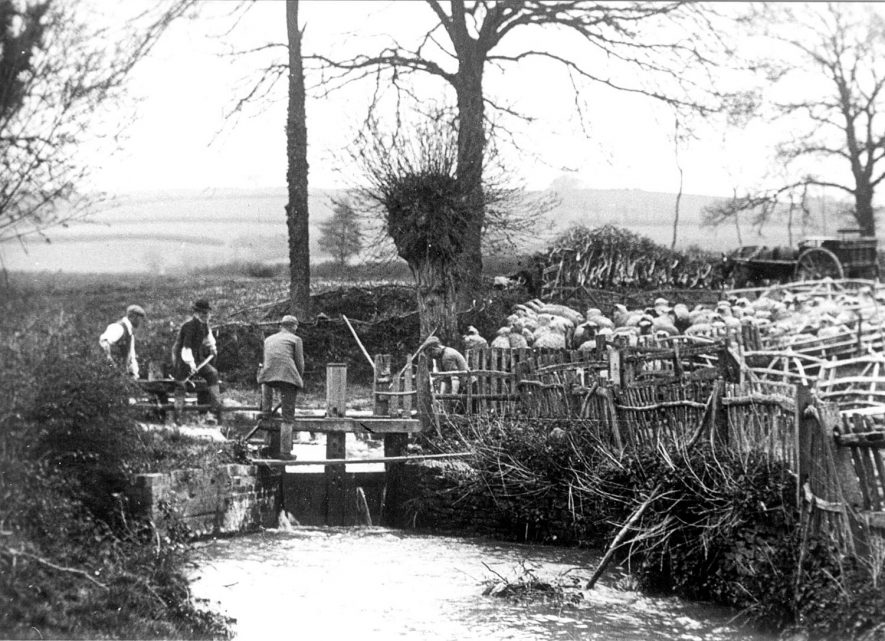 Sheep washing at  Washbrook. Sutton-under-Brailes.  1900s [Sheep washing is undertaken in running water to clean the fleece before shearing] |  IMAGE LOCATION: (Warwickshire Museums. Photographic Collections.)