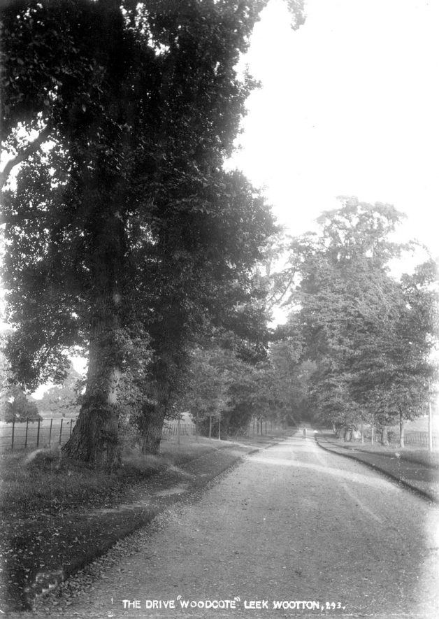 The tree lined drive at