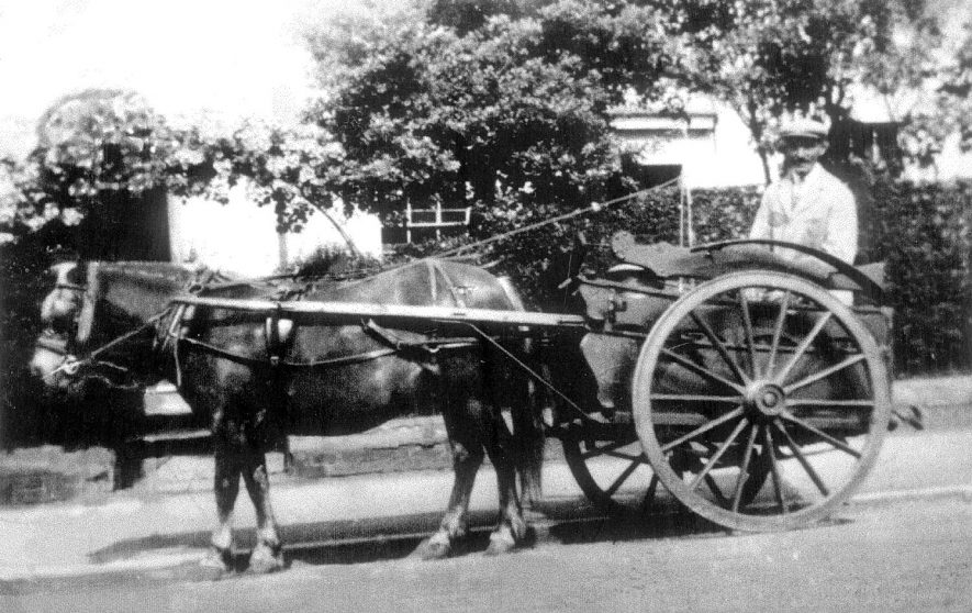 William Franks, milkman, seated in his horsedrawn milkcart in Cubbington. He bought the business from Charles Pickering of