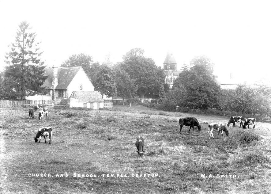 St Andrew's church and the school, Temple Grafton. Cows are grazing in the field in the foreground.  1900s |  IMAGE LOCATION: (Warwickshire County Record Office)