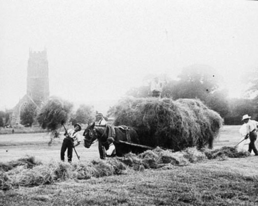 Farm workers loading hay onto a haywagon. Brailes church in background.  1900s |  IMAGE LOCATION: (Warwickshire Museums. Photographic Collections.)