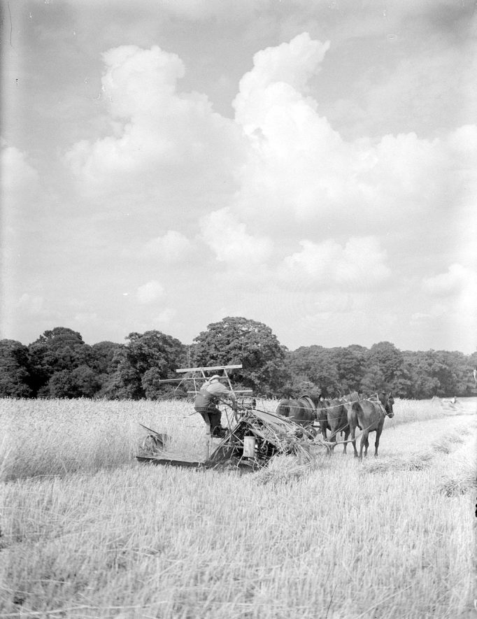 Horse drawn harvester at work on a farm at Heathcote, Leamington Spa.  1937 |  IMAGE LOCATION: (Warwickshire County Record Office)