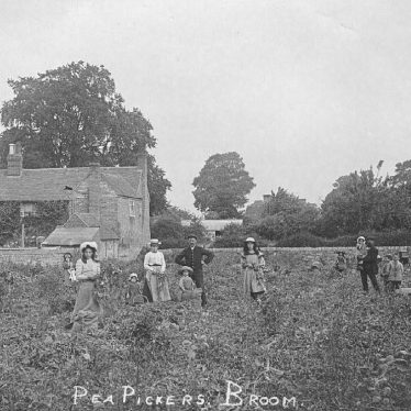 Broom.  Pea pickers at work