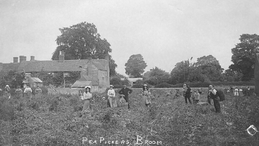 Pea picking at Broom, with everyone lending a hand.  1910s |  IMAGE LOCATION: (Warwickshire County Record Office)