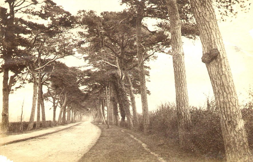The Coventry Road into Dunchurch with its distinctive pine trees lining the route.  1910s |  IMAGE LOCATION: (Rugby Library)