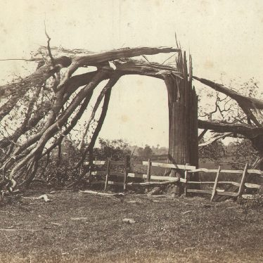 Dunchurch.  Tree struck by lightning
