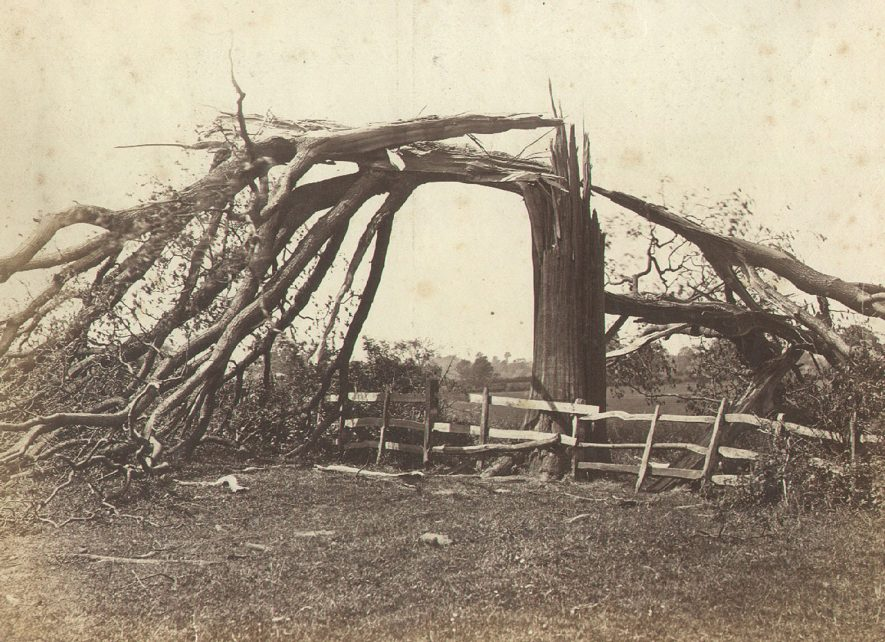 Tree struck by lightning on Lady John Scott's estate, Dunchurch.  1900s |  IMAGE LOCATION: (Rugby Library)