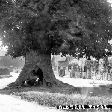 Tysoe.  Old Tree