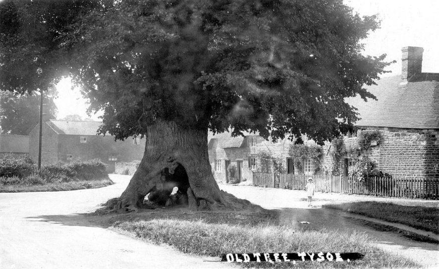 Tysoe Old Tree Our Warwickshire