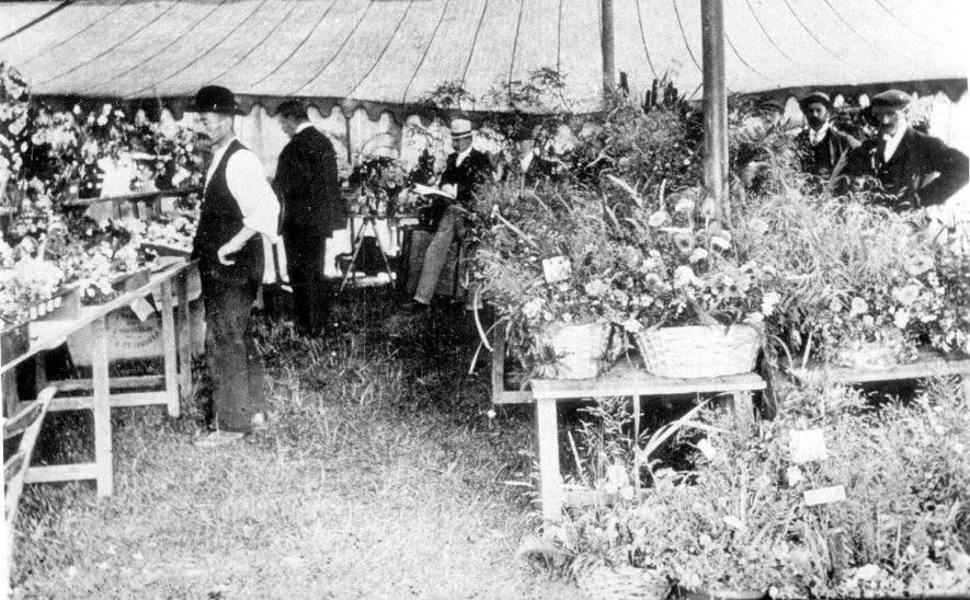 Exhibits at Stockton flower show.  1900s |  IMAGE LOCATION: (Warwickshire Museums. Photographic Collections.)