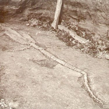Stockton.  Skeleton of an Icthyosaurus