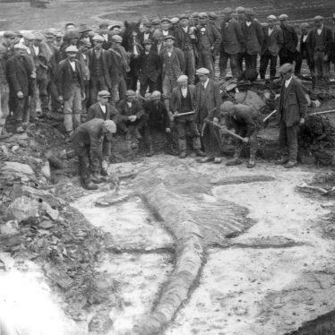 Harbury.  Quarry, Ichthyosaur fossil