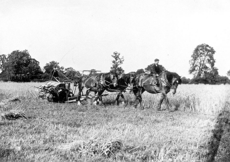 Harvesting at Chesterton with a horse drawn binder.  1920s |  IMAGE LOCATION: (Warwickshire Museums. Photographic Collections.)