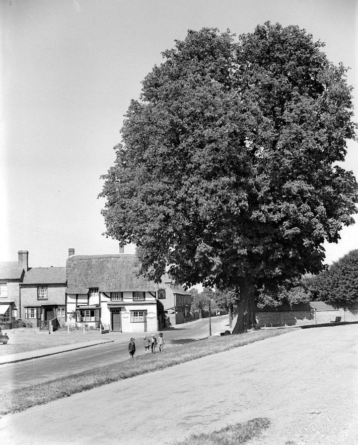 The Stag's Head and chestnut tree, Wellesbourne.  June 6th 1939 |  IMAGE LOCATION: (Warwickshire County Record Office)