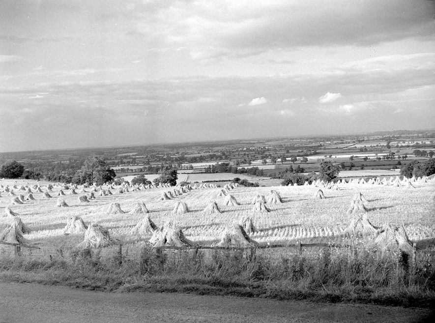 Field of corn storks on the hills at Burton Dassett.  1955 |  IMAGE LOCATION: (Warwickshire County Record Office)