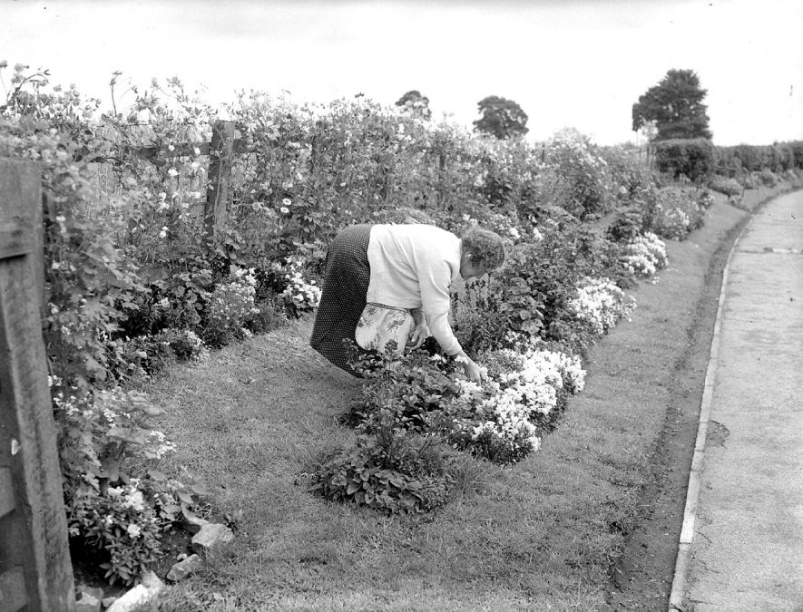 Bretford, best kept village.  Mrs Francis Teeton tending her flower beds.  August 1958 |  IMAGE LOCATION: (Warwickshire County Record Office) PEOPLE IN PHOTO: Teeton, Mrs Francis, Teeton as a surname