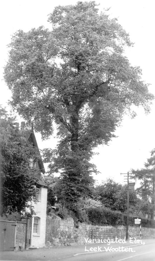 Variegated elm tree, Leek Wootton.  1940s |  IMAGE LOCATION: (Warwickshire County Record Office)