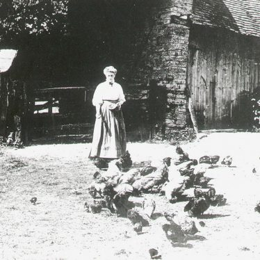Wilmcote.  Mary Arden's Farmyard