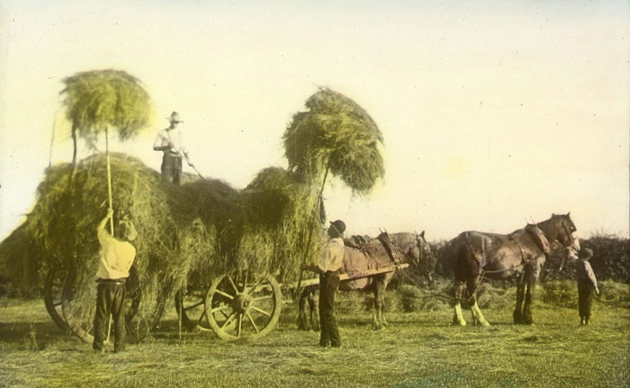 Mr Pearce and his men loading a haycart at Lower Milcote, Clifford Chambers.  1890s |  IMAGE LOCATION: (Warwickshire County Record Office) PEOPLE IN PHOTO: Pearce, Mr, Pearce as a surname