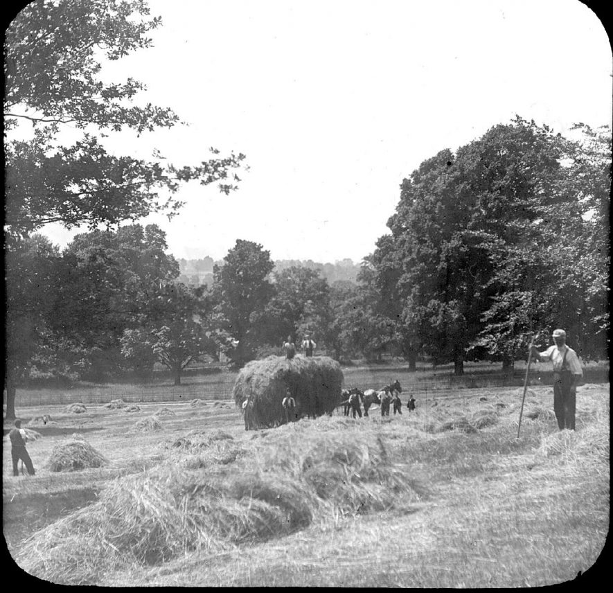 Farmworkers hay making at Clifford Chambers.  1906 |  IMAGE LOCATION: (Warwickshire County Record Office)