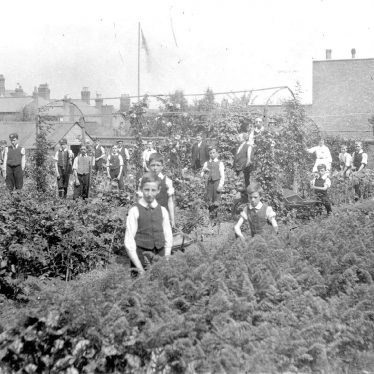 Rugby.  Murray School war garden