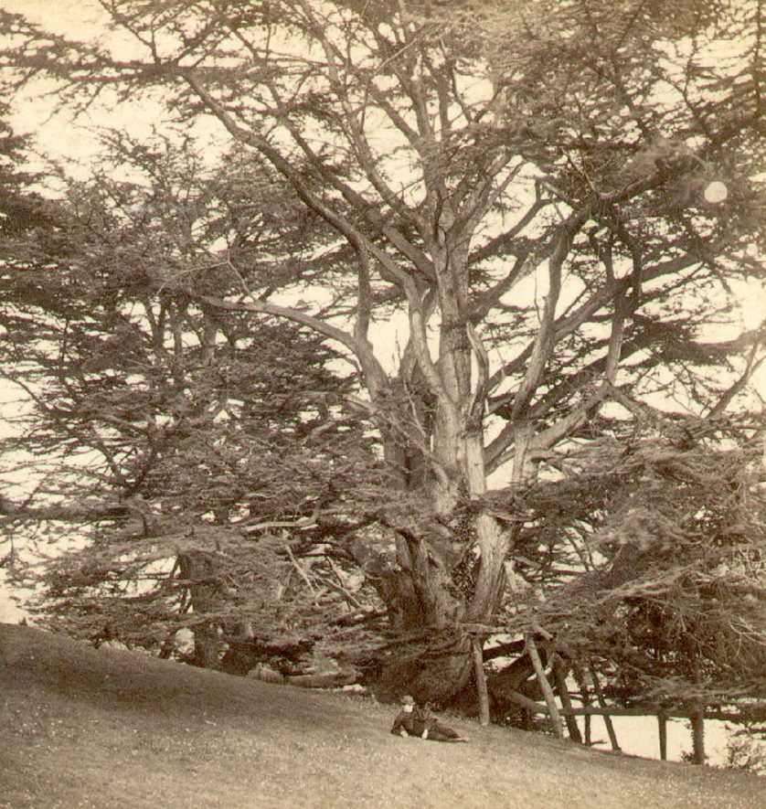 Guy's Cliffe park, Warwick.  1870s    IMAGE LOCATION: (Warwickshire County Record Office)