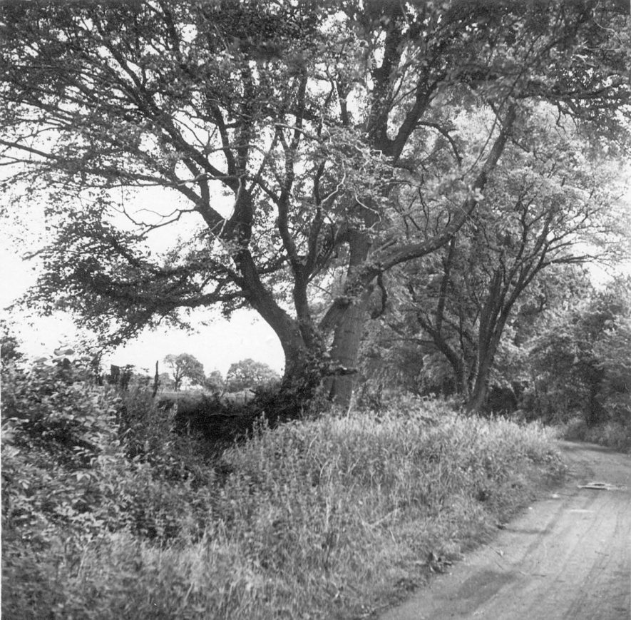Blackberry Lane, Exhall, nr Coventry.  1946 |  IMAGE LOCATION: (Warwickshire County Record Office)