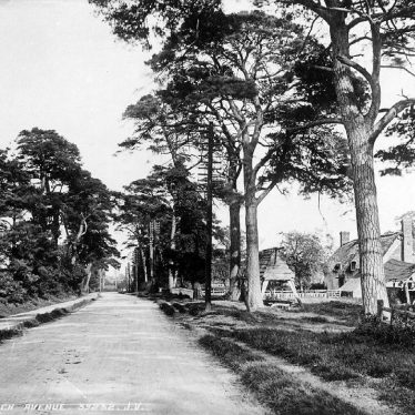 Dunchurch.  Tree lined avenue