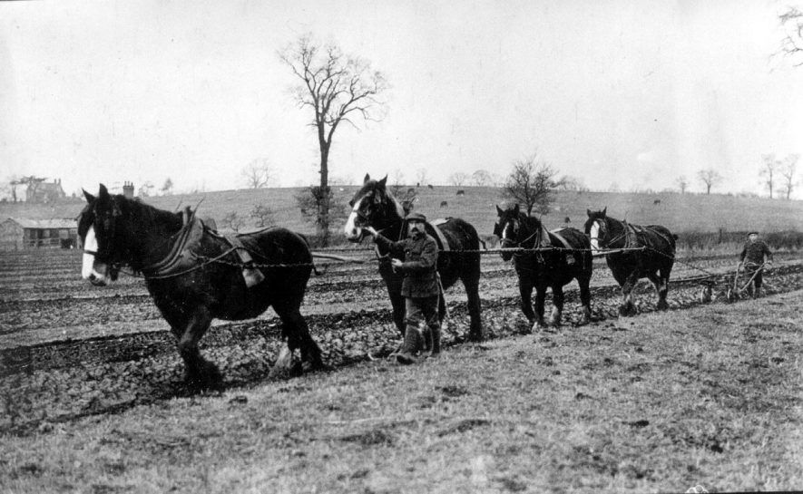 The Duke of Buccleuch's Estate, Dunchurch. Toft farm. James Russell's ploughing team led by German Prisoner of War.  Ploughing out grassland.  1942 |  IMAGE LOCATION: (Warwickshire County Record Office)