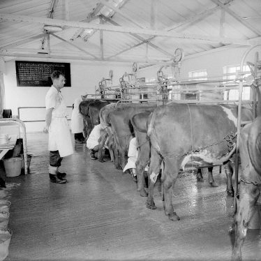 Moreton Morrell.  Moreton Hall milking parlour
