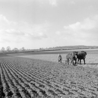 Long Itchington.  Horse ploughing