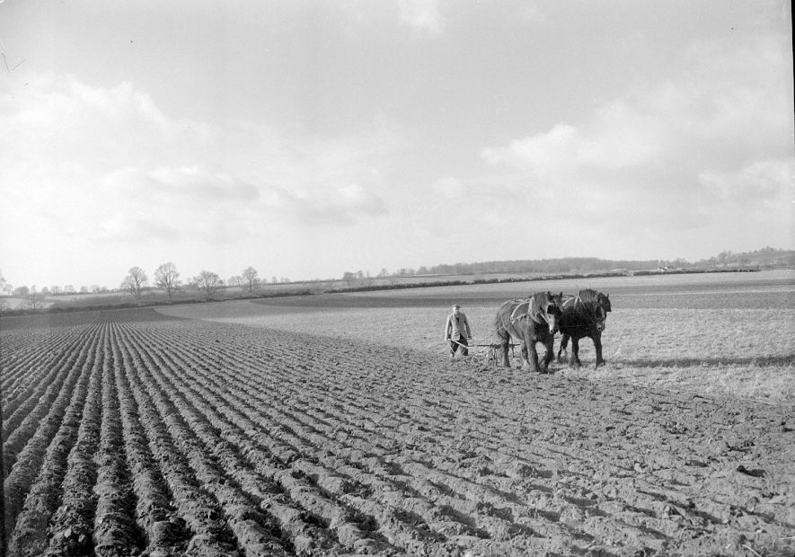 Ploughing with horses and hand held plough at Long Itchington. January 16th 1957[The man ploughing with the shire horse was Mr Dick Hunt He lived in the farm cottages on the Grimes farm at the start of Short Lane] |  IMAGE LOCATION: (Warwickshire County Record Office)