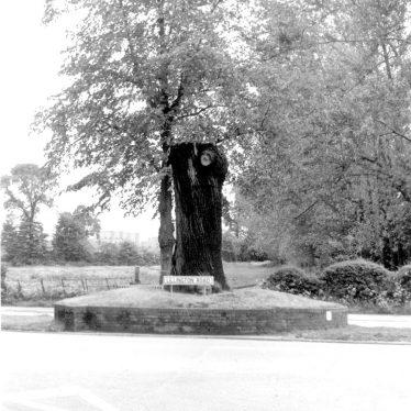 Lillington. Midland Oak