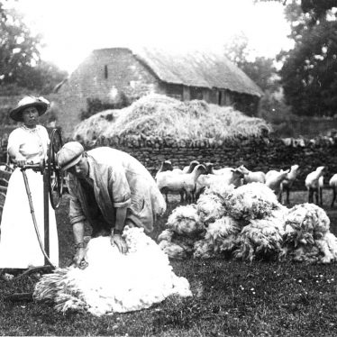 Cherington.  Sheep shearing