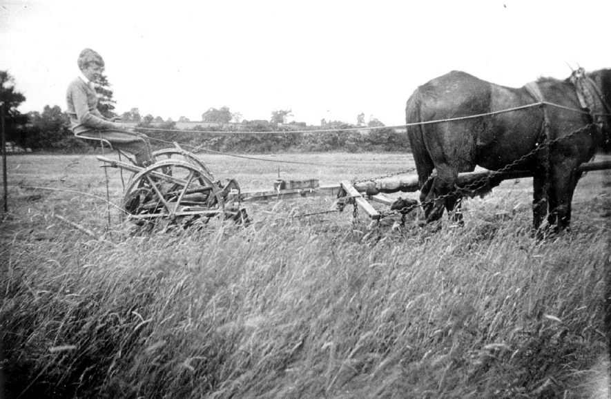 Mowing hay on meadow near Old Kennels Farm on the Hampton Road, Warwick, inhabited by the Potter family.  Bob Potter on mowing machine.  1930s |  IMAGE LOCATION: (Warwickshire County Record Office) PEOPLE IN PHOTO: Potter, Bob, Potter, as a surname