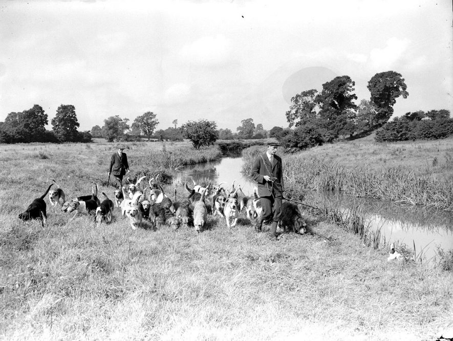 Otter hounds and men by stream, Radford Semele.  1958 |  IMAGE LOCATION: (Warwickshire County Record Office)