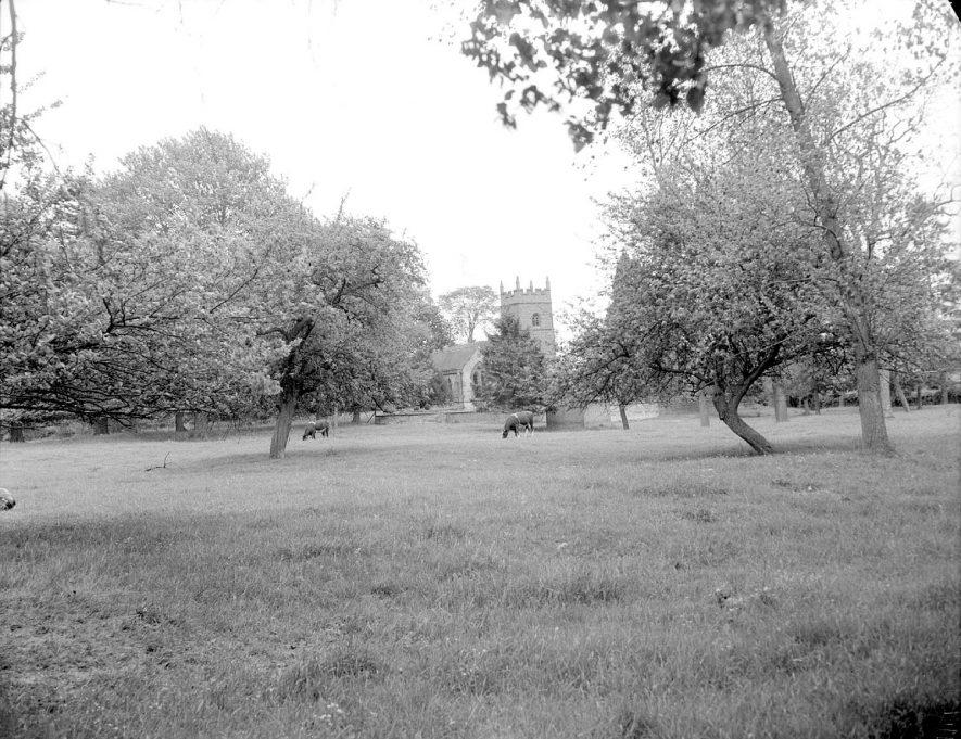 Pillerton Hersey parish church viewed across meadow.  1956 |  IMAGE LOCATION: (Warwickshire County Record Office)