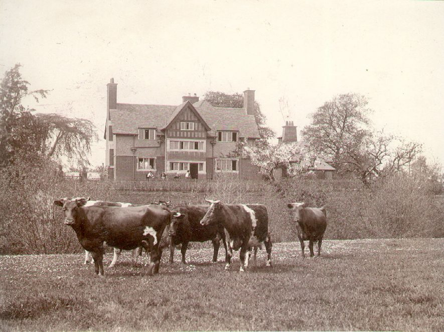 South east view of Ellen Badger Cottage Hospital, with a group of cows in the foreground, Shipston on Stour.  1905 |  IMAGE LOCATION: (Warwickshire County Record Office)