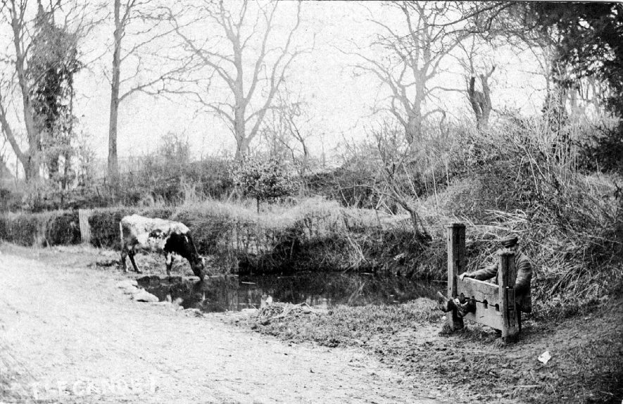 The stocks with man on seat, Flecknoe. Pond with cow drinking. 1900s. The pond is now grassed over and a new set of stocks is in place. (Information given by Mrs S. Thomas of Flecknoe) |  IMAGE LOCATION: (Warwickshire County Record Office)