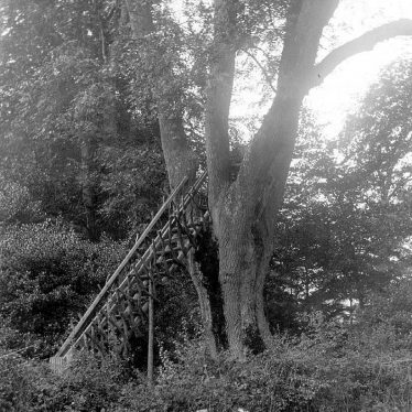 Foxcote.  A seat in a tree in a wood